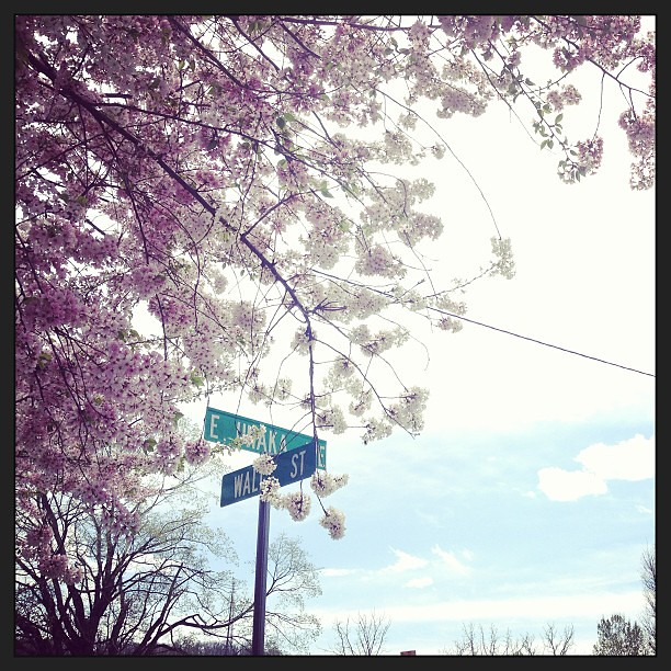 Running in 81* weather was made bearable by the FLOWERS. Everywhere. #coloroverload! #yayspring