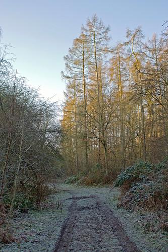 Frosty morning by TonyKRO