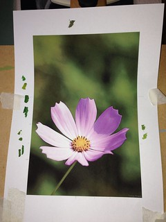 April 2013 - Purple Flower (work in progress)