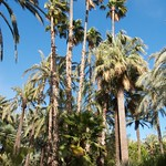 Parlm tree, Garden of Healing