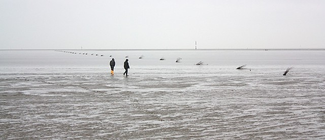Nationalpark Wattenmeer, Wadden Sea National Park, Cuxhaven, Germany, by fotoeins