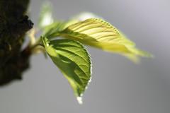 Verdure