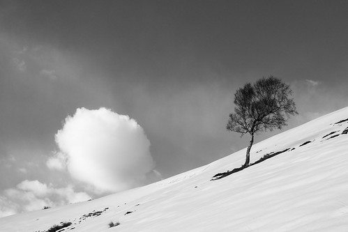 lone tree on side of snowy hill