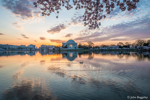horizontal sunrise landscape landscapes washington spring nikon outdoor wildlife capitol d800 tidalbasin thomasjeffersonmemorial borderfx afsnikkor2470mmf28ged