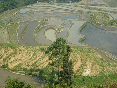 Yunnan13-Yuanyang 10-Luomadian (5)