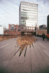 The Diller on the High Line