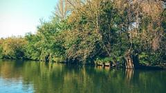 Wharf ruins at Deep Run, Rappahannock River, Fredericksburg Virginia