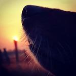 #dog beats #sunset.