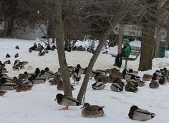 Milligan's Pond - Barrie,Ontario