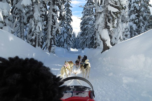 Just another Christmas Eve dogsled ride with Kimmie