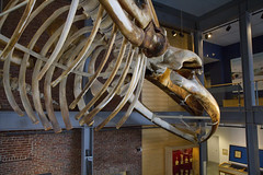 20130222 - New Bedford Whaling Museum