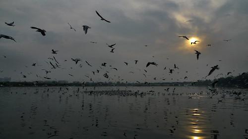 india reflection birds sunrise river grey delhi yamunariver