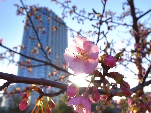 芝公園(Shiba Koen)