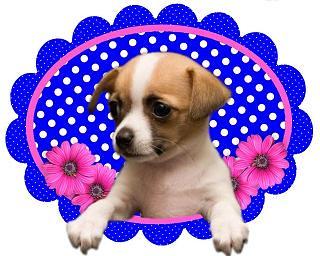 hondje blauw