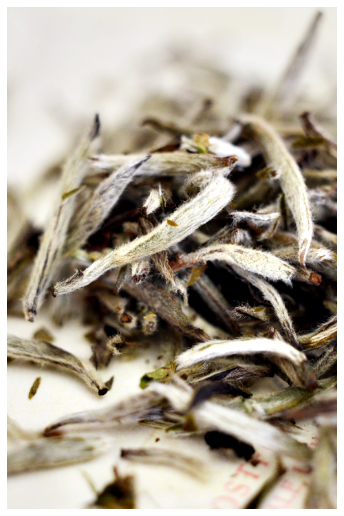 silver needle tea© by Haalo