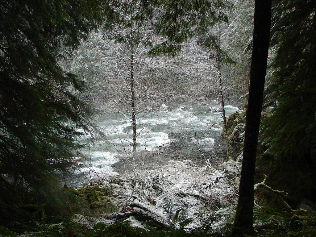 Snow falling on the Little North Santaim River