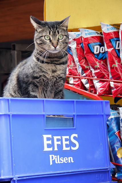 A cat in Kadikoy, Istanbul, Turkey カドゥキョイのネコ
