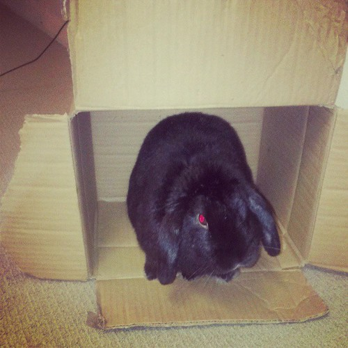 Cardboard box of courage (and evil red eyes) #bunnies