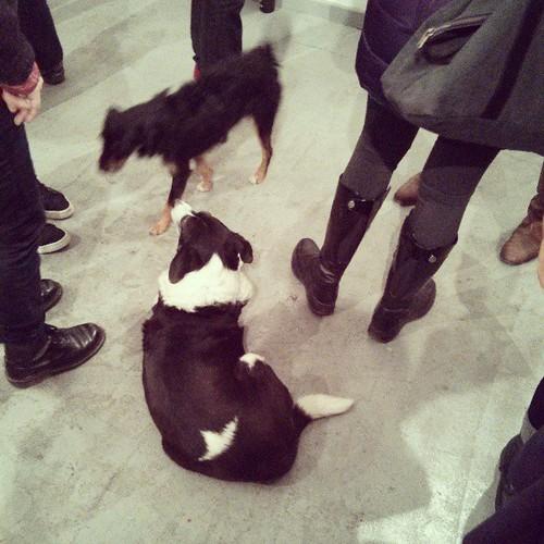 #ausstellung #instadoggies #doggies