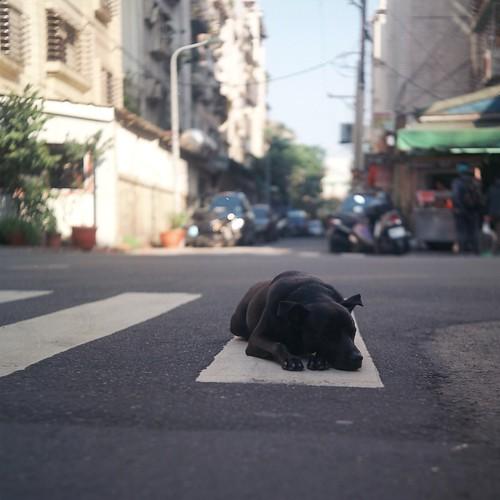 [フリー画像素材] 動物 (哺乳類), 犬・イヌ, 寝顔・寝姿, 街角 ID:201303241000