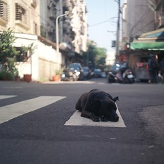 [Free Images] Animals (Mammals), Dogs, Sleeping, Streets ID:201303241000