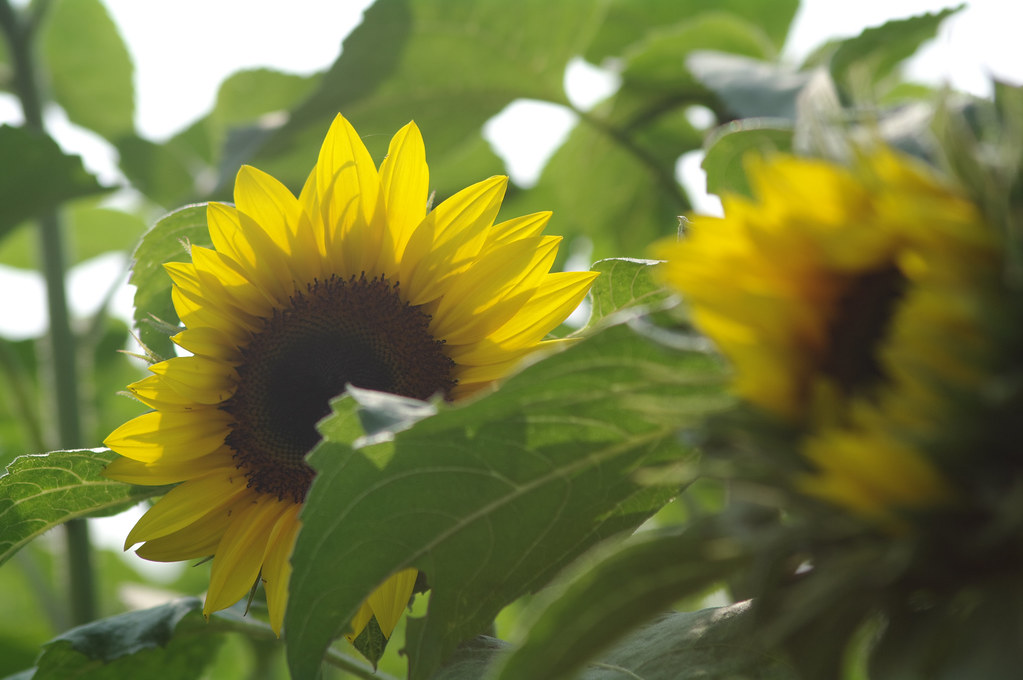 向陽~~ 追 蜂