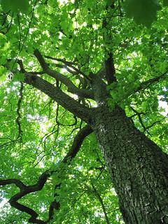 _tree_full