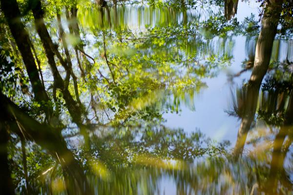 RYALE_Everglades-038