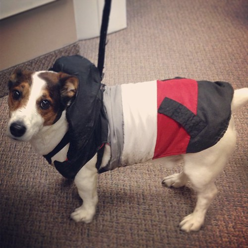 A coat-wearing dog visited my office today. Naturally I had to take a photo.