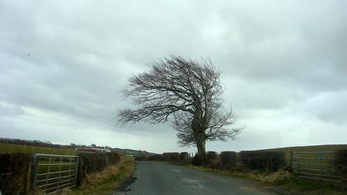 A tree in the winter width=
