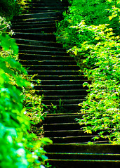 Summer steps in Scarborough. By Thomas Tolkien