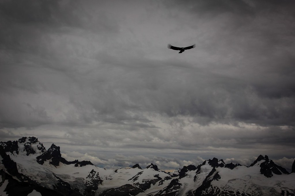 A curious Condor flies over the ridge, investigating the small moving dots in its habitat. San Lorenzo range. Aysen. Patagonia. Chile.