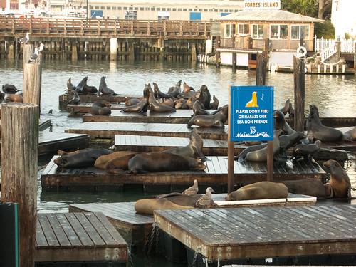 Famous Pier 39 Sea Lions!