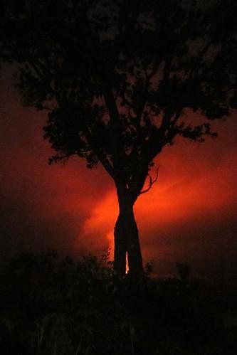 tree silhouette island fire volcano hawaii lava nationalpark glow steam tropical bigisland geology hawaiivolcanoesnationalpark nationalparkservice kilauea pele puna vulcanism geological ohia hawaiicounty volcanohouse hawaiiisland 2013 barryfackler barronfackler our23rdanniversary