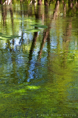 river green by Alida's Photos