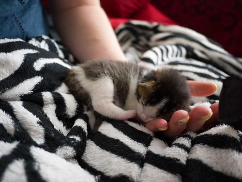 Mia's Kittens 29
