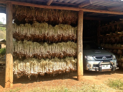 garlic drying shed