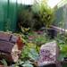 Garden Down Low