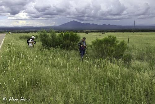 az arizona arizona2016 cochisecounty montezumacanyonroad locpublic viseveryone