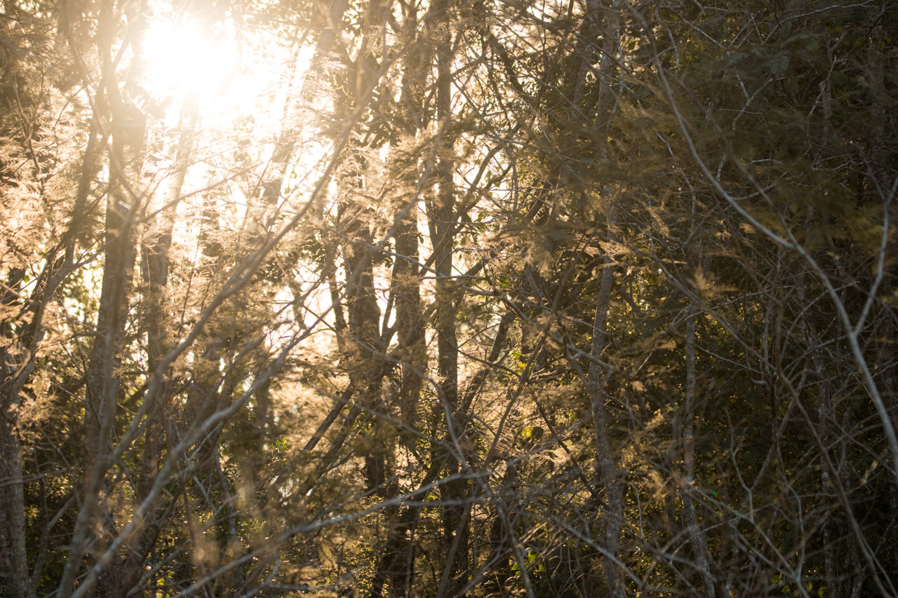 El bosque de la Reserva Morombí contiene una gran diversidad de aves, así como árboles de gran altura. (Tetsu Espósito)