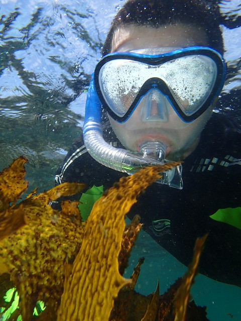 Snorkelling at Shelly Beach, Manly, Sydney