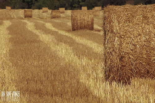 two field oregon corner landscape ian photography highway farm south country harvest images part ii rolls hay agriculture rolling sane 211 hamricks