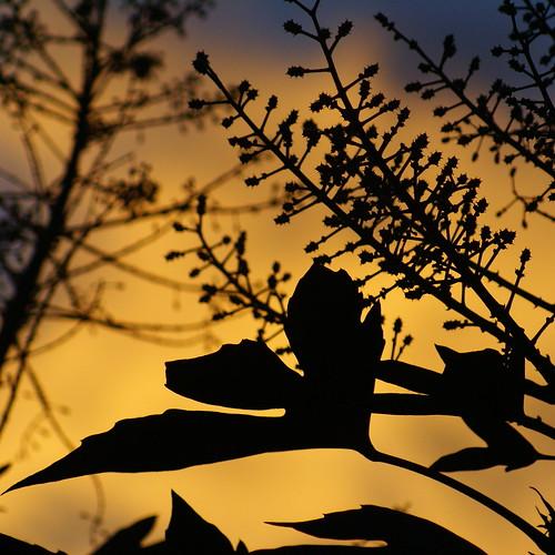 naturaleza color nature hojas atardecer colombia natura colores retiro medellín antioquia martaestrada blinkagain