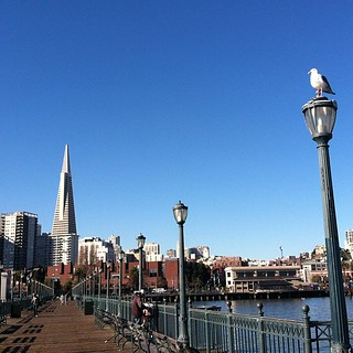 Bird vs. City. From my lunch  walk. Feels like 70 degrees in #sanfrancisco !