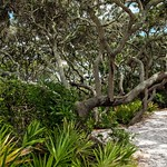 Stay on the Trail: Grayton Beach State Park