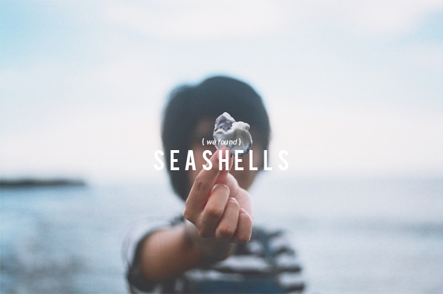 We Found: Seashells
