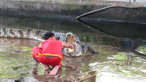 Koh Samui Crocodile Farm サムイ島 クロコダイルファーム (8)