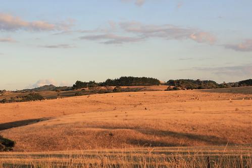 newzealand summer farm drought muriwaivalley