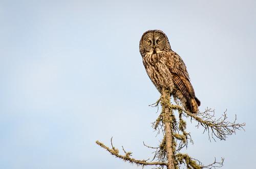 2013 02 23 Owl