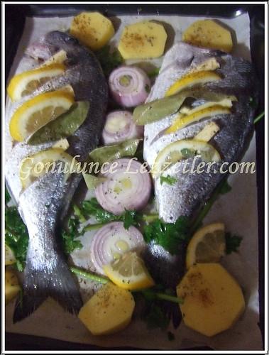 balık 3